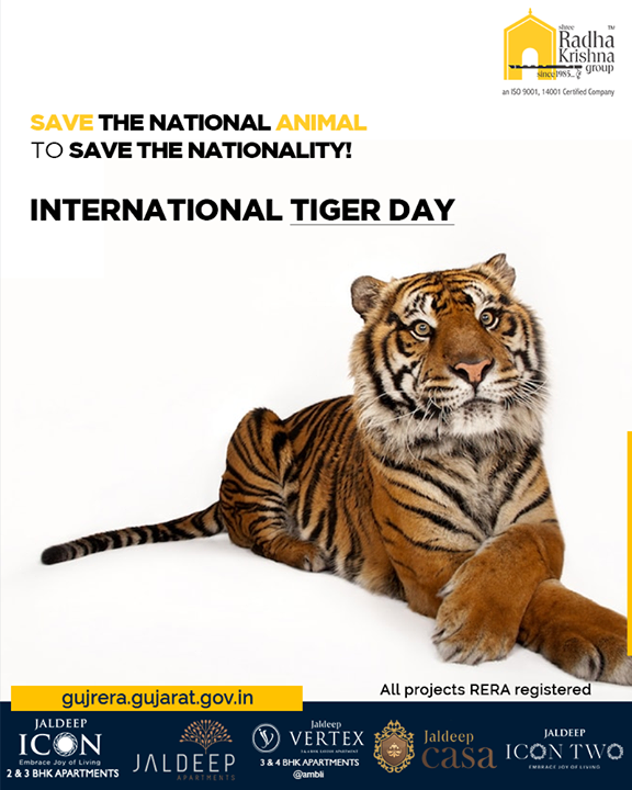 Save the national animal to save the nationality!  #InternationalTigerDay #WorldTigerDay #TigerDay #SaveTheTiger #Tigers #ShreeRadhaKrishnaGroup #Ahmedabad #RealEstate #SRKG